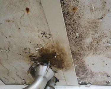 Le plafond, un revêtement clé en milieu hygiène